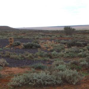オーストラリアの砂漠に行ってきました。
