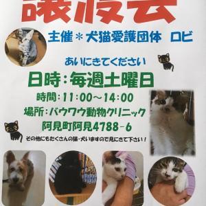 10月27日(土) 犬猫譲渡会のお知らせ①