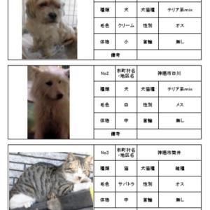 茨城県動物指導センター 犬譲渡会のご案内