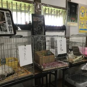 猫譲渡会&バザー