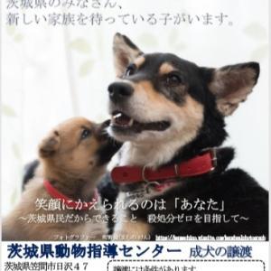 茨城県動物指導センターによる「成犬の譲渡会」