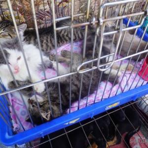 激安猫ちゃんアニマルマーケット。アルマトイ→ビシュケク
