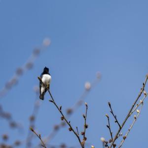 小鳥たちの囀り