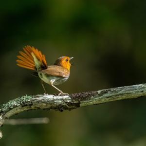 探鳥地 新規開拓