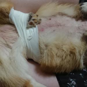 脱臼の固定治療
