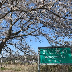 武庫川の桜とFF7 (。-_-。)