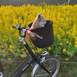 ぶぶと自転車散歩 ( ◠‿◠ )