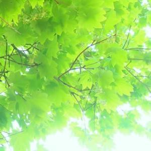雨スタートの6月(;´・ω・)