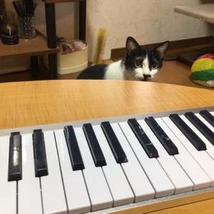 ピアノあそび となりのトトロ