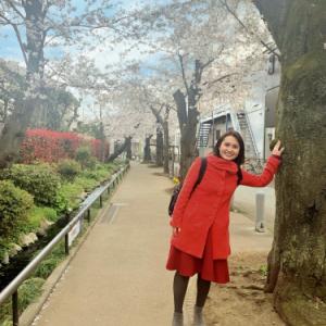 北沢川緑道桜並木