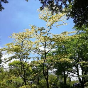 森林浴① in 六甲山 マイクロツーリズム兵庫再発見②