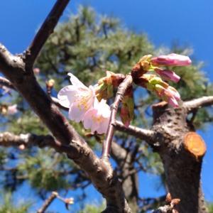 睦月の満月に和暦講座へ② 茶道具調達と梅の初詣