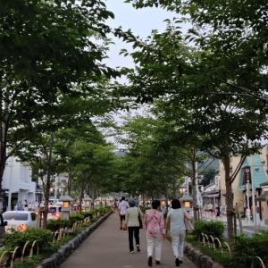 紗の着物で鎌倉ぼんぼり祭り2020②