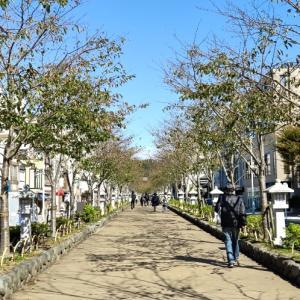 秋限定柄のフォーマルコーデで鎌倉お茶席へ③