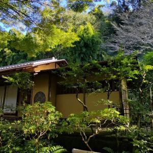秋限定柄のフォーマルコーデで鎌倉お茶席へ⑥