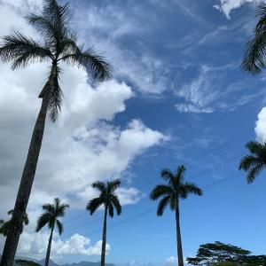 ハワイのホームレスの数 ホノルル4400人以上