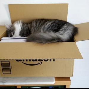 Amazonでオーダー出来るの⁉️&すすむ君⁉️