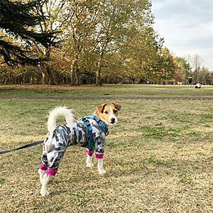 広い公園で秋色散歩
