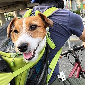 犬はらくちん、人間汗だくのサイクリング