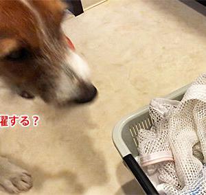 LOVE♪洗濯ネット