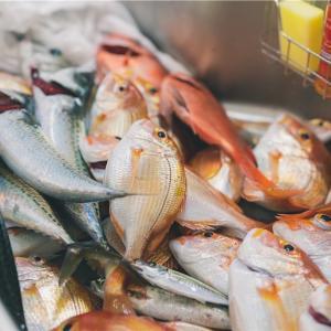 今年も白浜の貸別荘で魚を釣って捌いて料理して食べるやつやってきました。