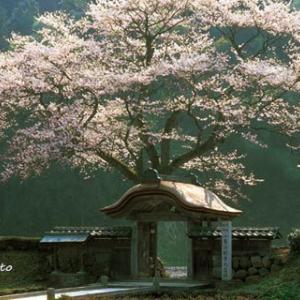 NHK麒麟の舞台、福井県一乗谷に行こうと出かけるも、途中で引き返す