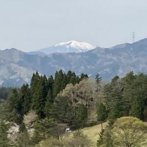 2021.04.24.(土)葉桜、八重桜の中ラウンド(美野原カントリークラブ 前半)