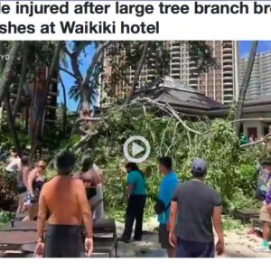 ヒルトン・ハワイアン・ビレッジでバニアンツリーの枝が落ちて大事故