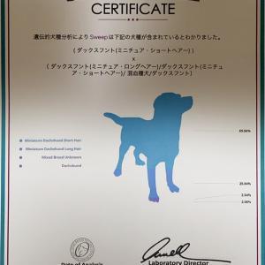 犬種鑑別検査プロファイルが届きました