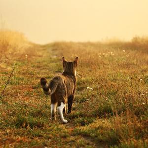 一人で生きる覚悟 私は楽しく一人で生きて一人静かに旅立ちたい