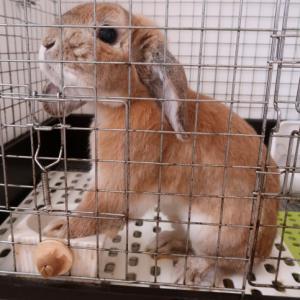 順番が回ってきたので、そわそわしております~!&アオサギさんの飛翔シーン、ゲット~!!