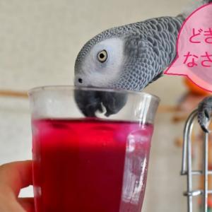 紫蘇ジュースをいただいてみたよ!&頭の毛を3本立ててみました!
