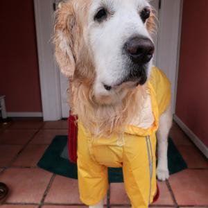 お久しぶりの雨に濡れたわんこたち&低気圧の不調に効くお薬