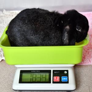 ぬきうち体重測定と言うオソロシイことをいたしました~!!