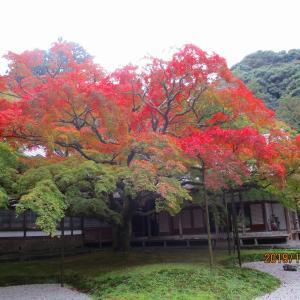 ご来福 糸島巡り③千如寺・桜井二見ヶ浦の夫婦岩
