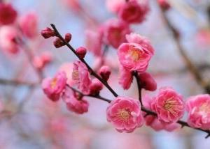 春の花は梅と仏の座花言葉は??