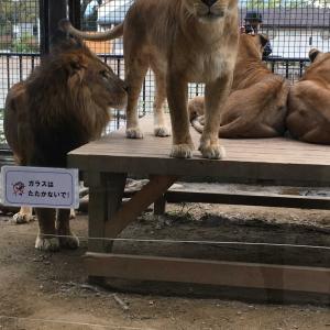 動物園と子供服