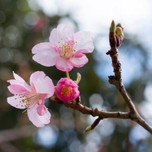 卒業   ~ 芽吹く春 ~