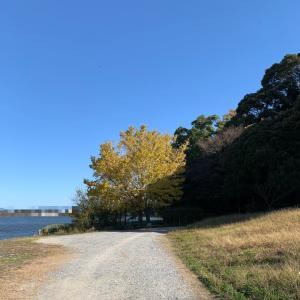 おひとりさま紅葉を楽しむ@公園一周散歩