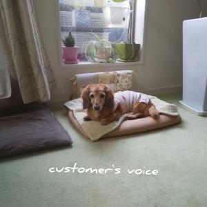 シニア犬長時間シッターをご利用いただいたお客様の声