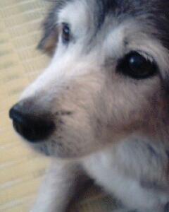 愛犬の介護の始まり