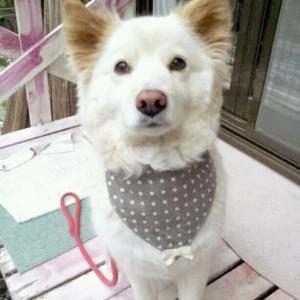 18歳と7か月くらい愛犬マリーの初七日