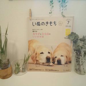いぬのきもち7月号【成犬トイレトレーニング】