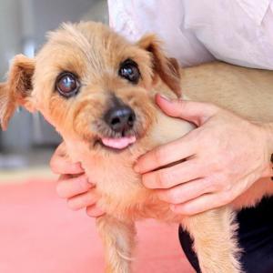 14歳シニア犬ケア