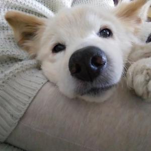 シニア犬ご飯のお悩み