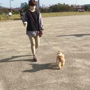 犬に吠える7歳トイプーちゃんのトレーニング