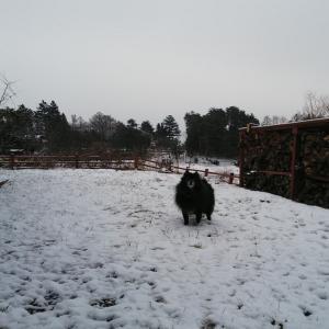 予報では大雪のはずだったけど