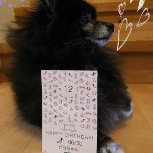 祝 12歳の誕生日✨