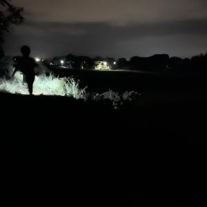 夜の楽しい虫観察