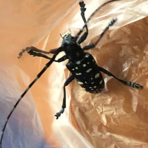 ★カッコいい昆虫がいつもやってくる★セトゥス♪♪